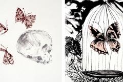 cráneo y mariposa (grabados)